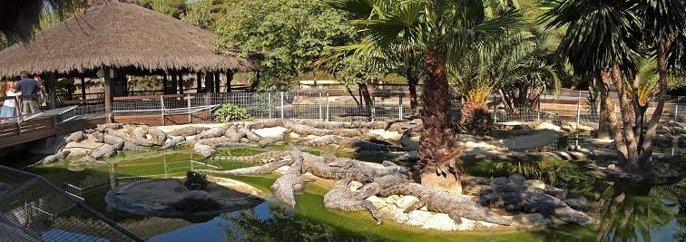 Crocodile Park in Malaga